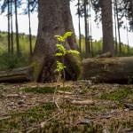 Hiking Schwerte (Bürenbruch 2)